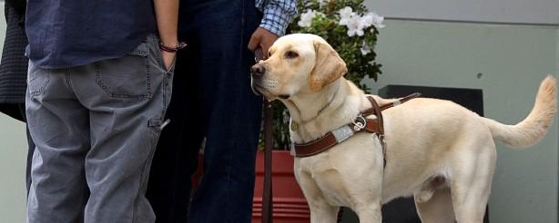 service-dog-course