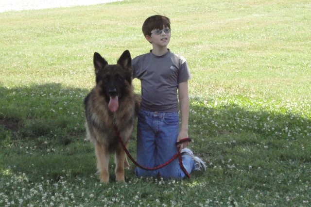 german shepherd dogs essay Describing a dog can be a very fun filled writing exercise  may be easier just to  pluck out any words you find useful and mix them up for your essay  a puppy, a  handbag dog, a labrador, a german shepherd, a rottweiler.