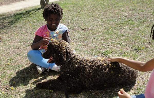 <h2>Coco &#8211; Standard Poodle </h2>