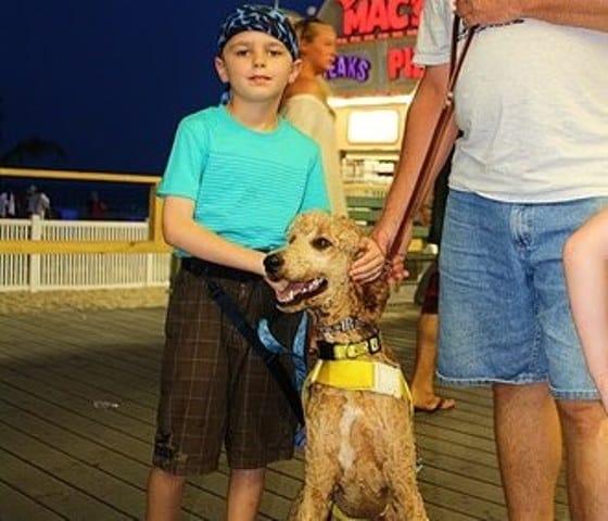 <h2>Dylan &#8211; Standard Poodle</h2>