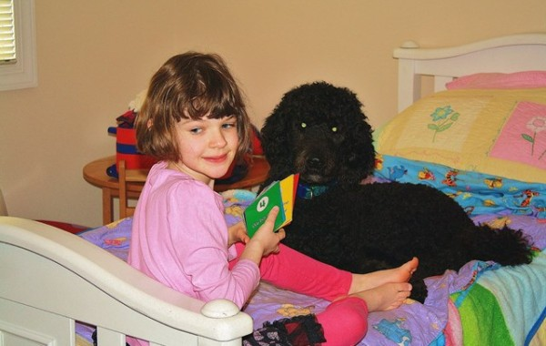 <h2>Jackson &#8211; Standard Poodle</h2>