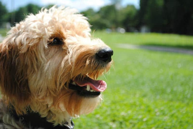 service dog training programs