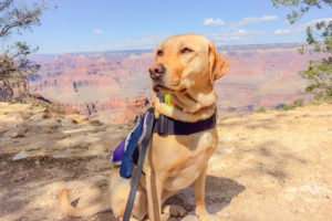 Autism service dog Karma at Grand Canyon