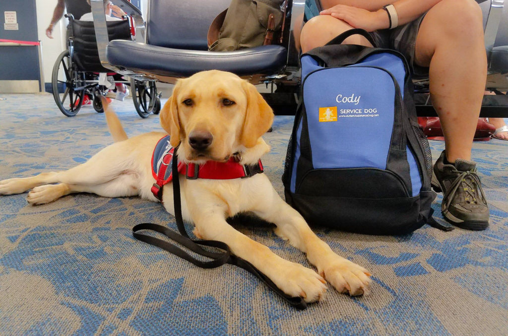 service dog delivery airport