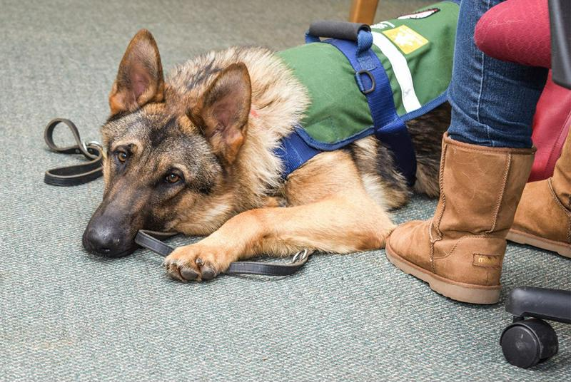 seizure alert service dog