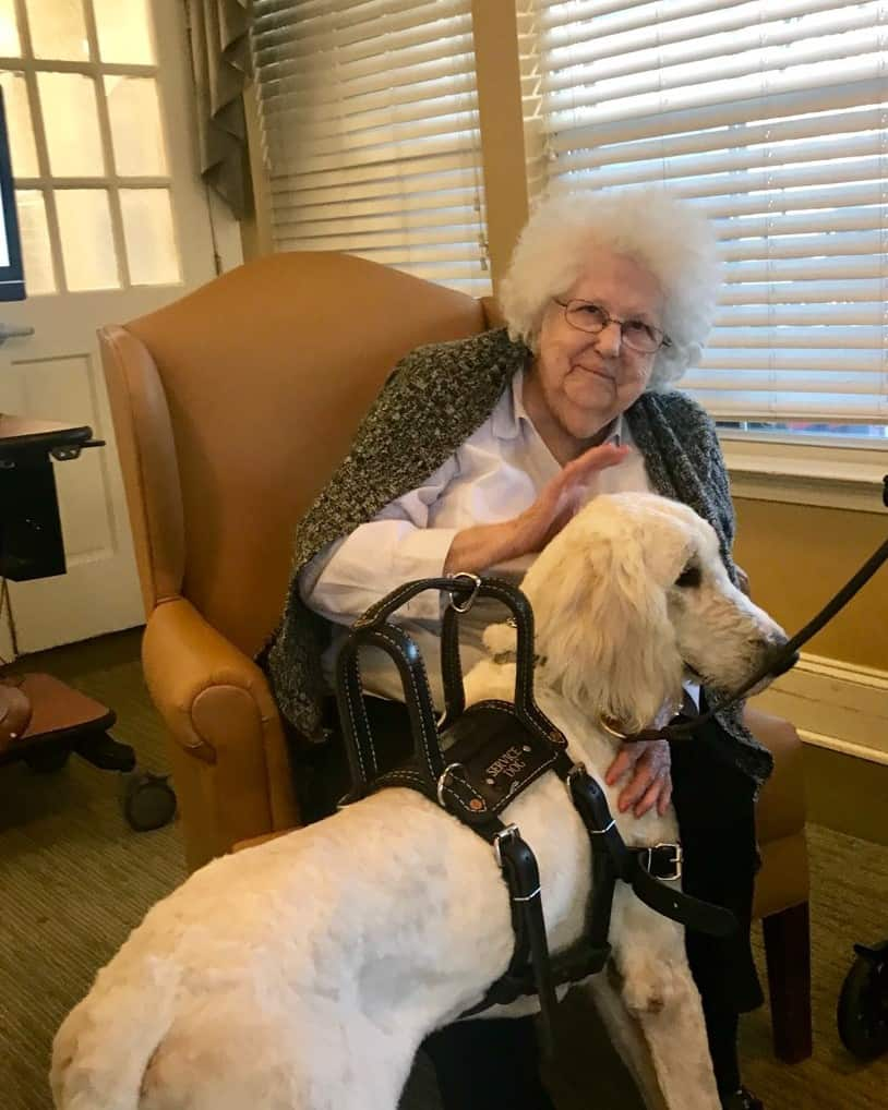 Service dog in training socializing assisted living program