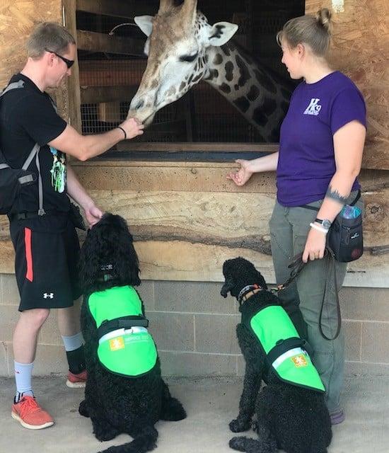 service dogs zoo giraffe