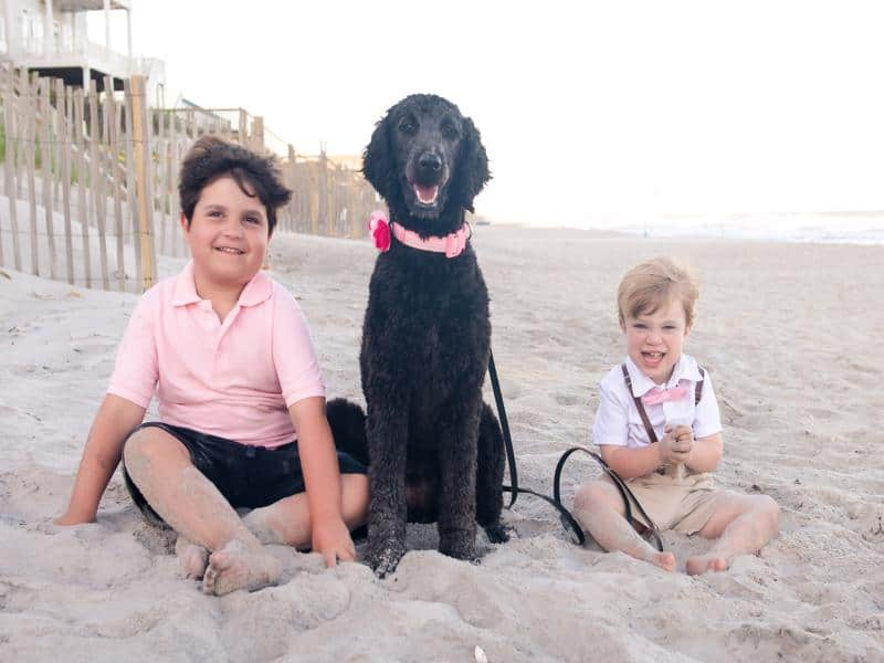 Autism assistance dog benefits