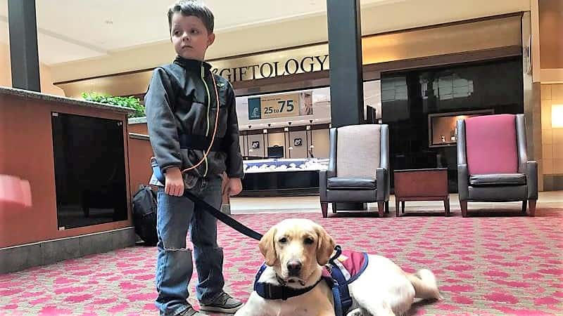 autism service dog preventing eloping behaviors