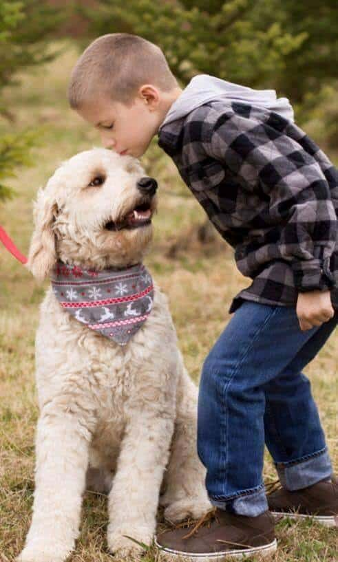 Goldendoodle autism assistance dog with child