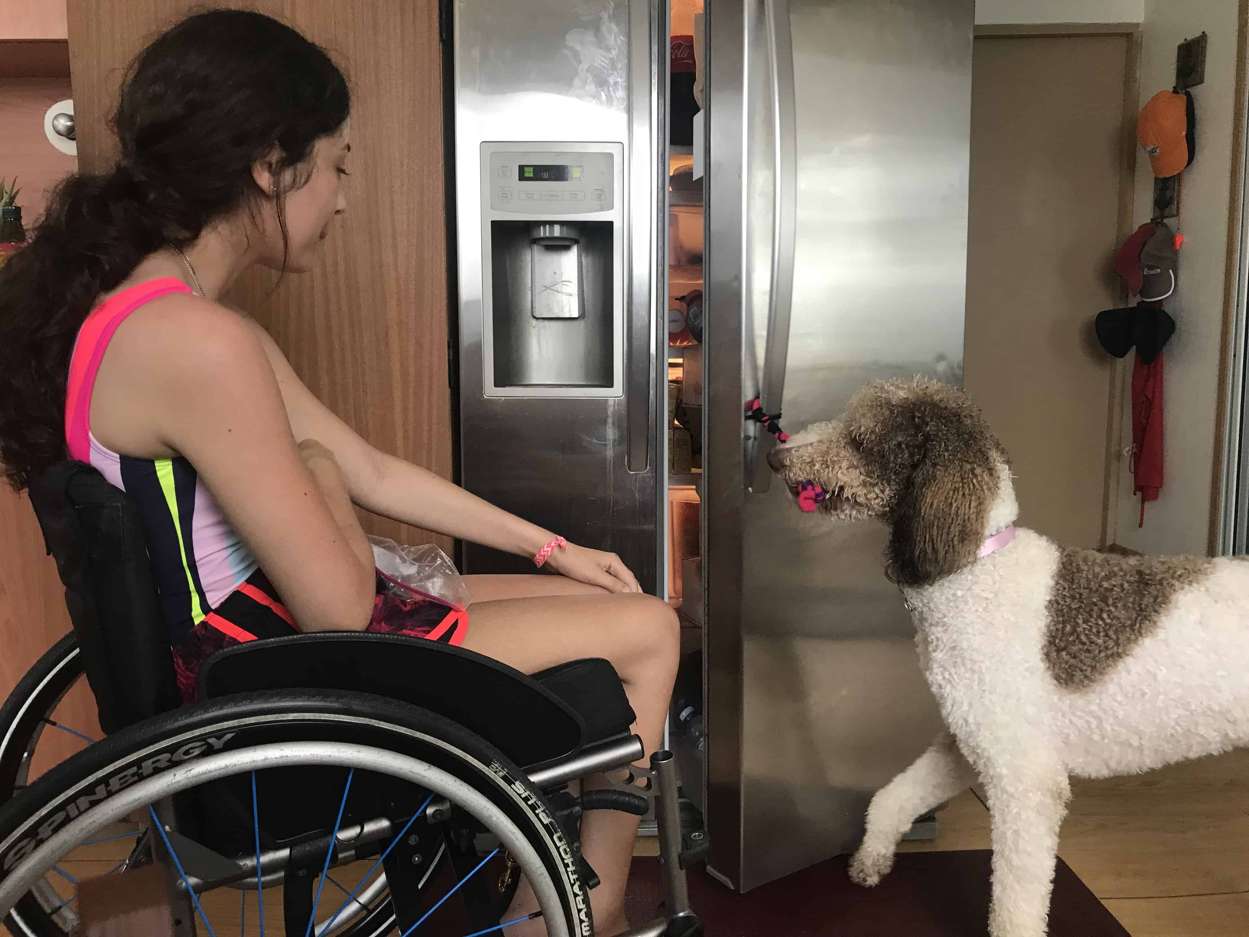 Mobility Service Dog opening refrigerator
