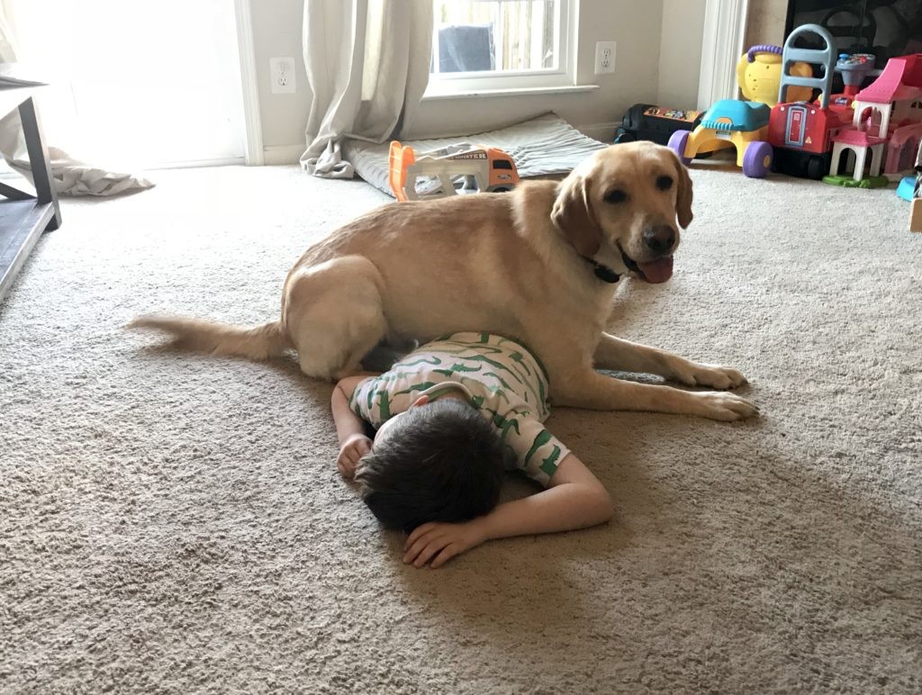 Autism Assistance Dog Tasks