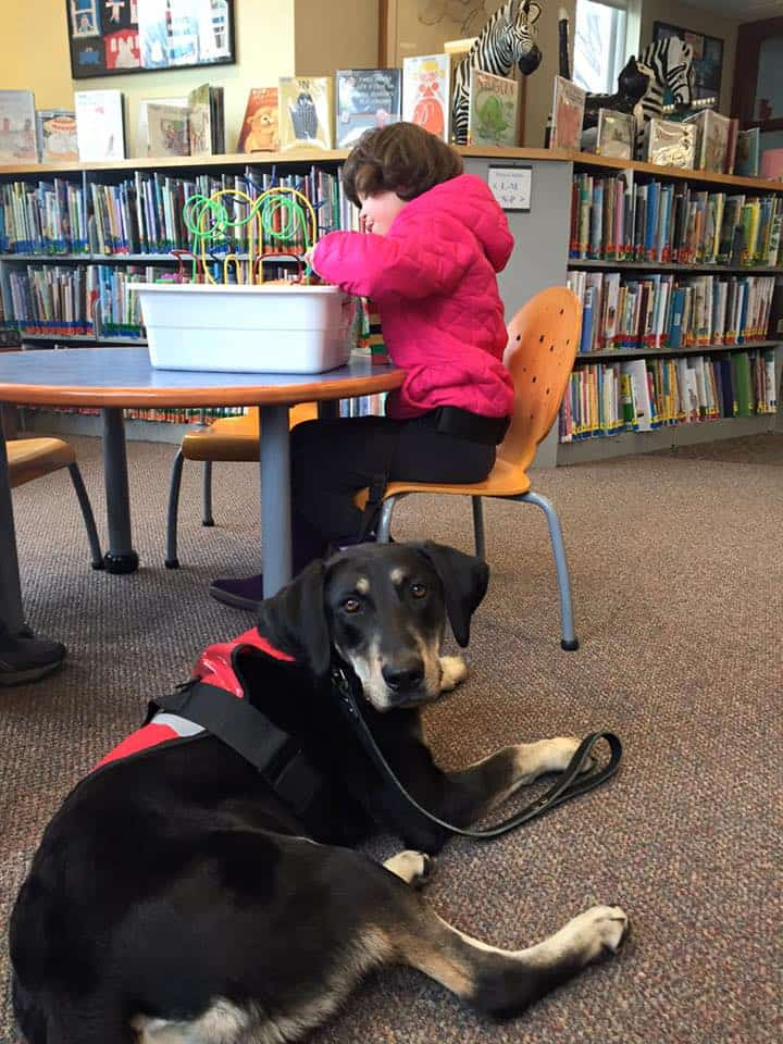 Service Dog in child's school