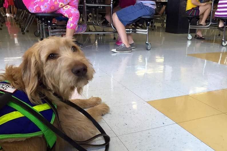 Elementary school service dog