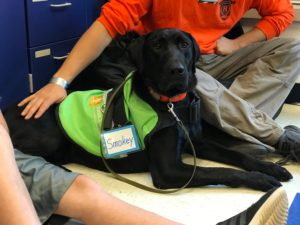 Service Dog practicing down stay in classroom