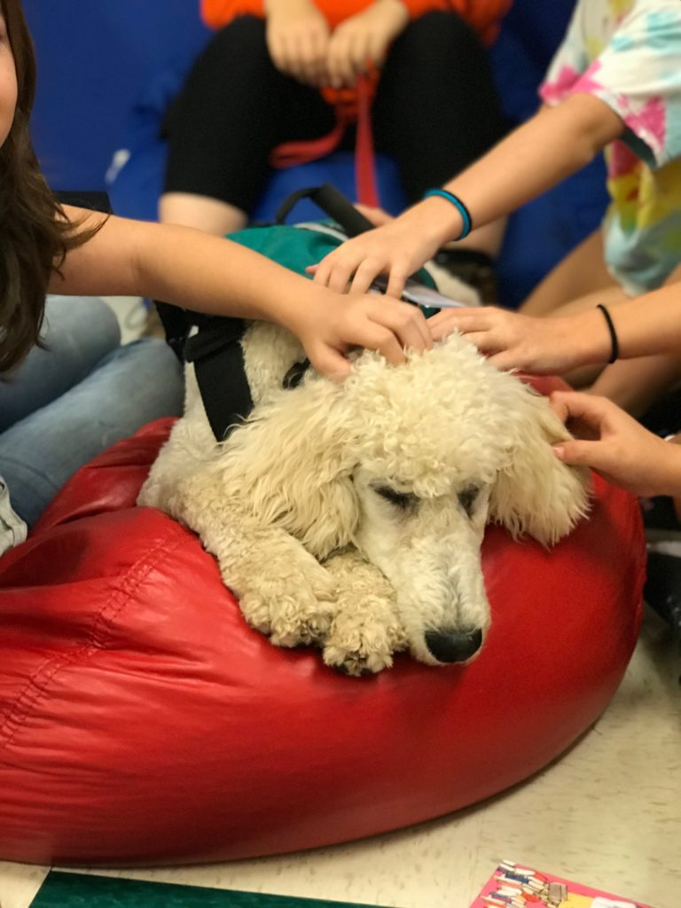 Service dog candidate socializing with children
