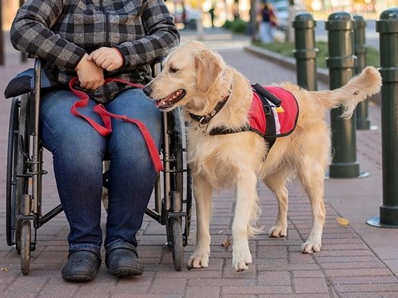 mobility service dog