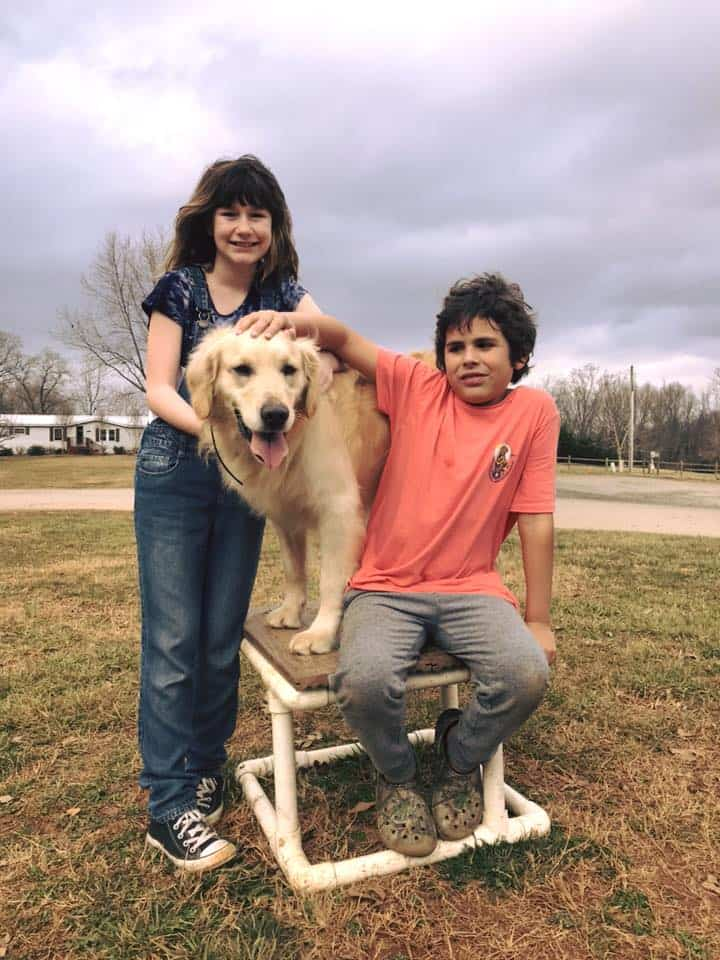 autism service dog with children