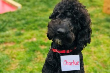 Service dogs and how they got their names