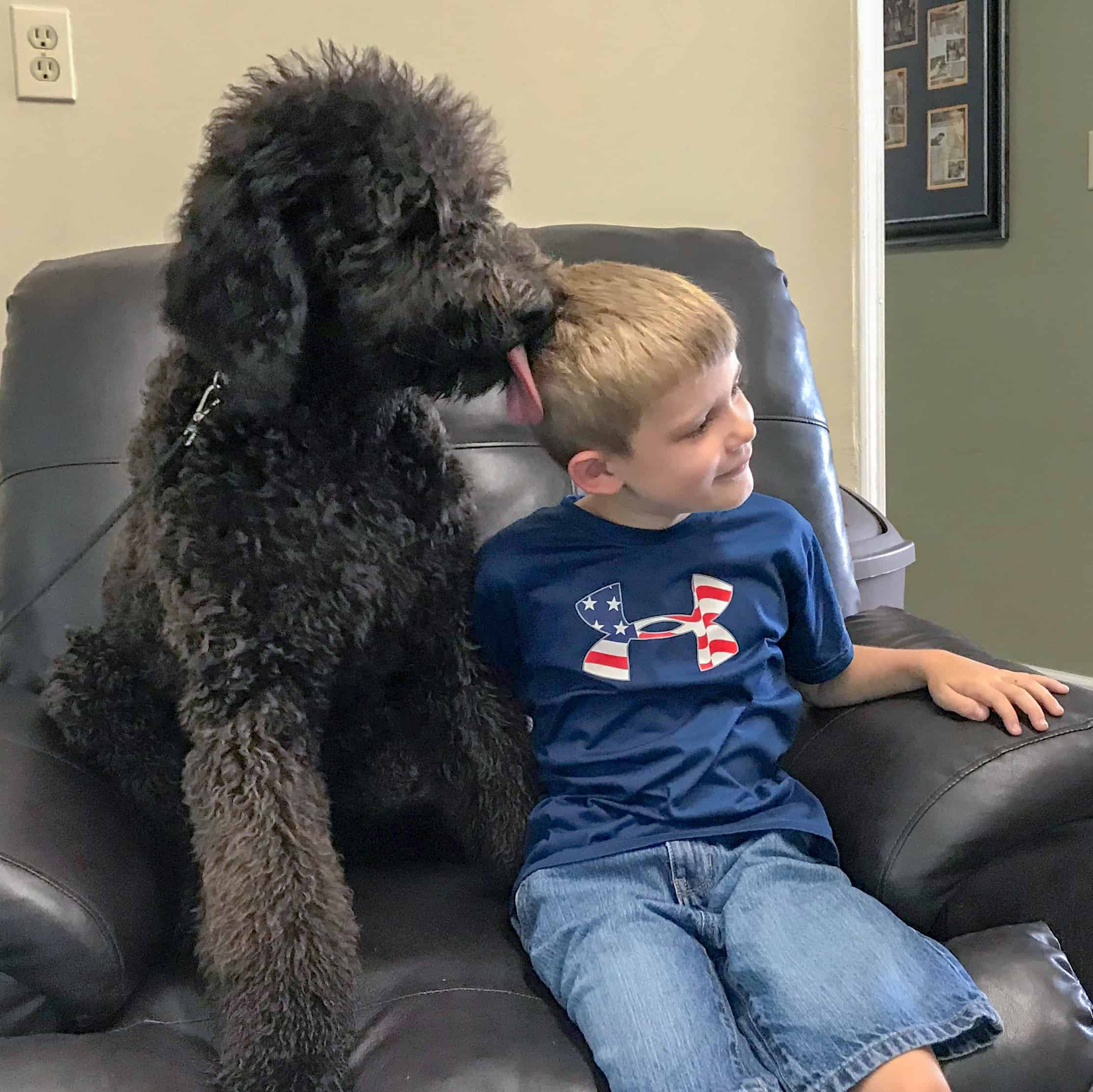 autism service dog meeting child