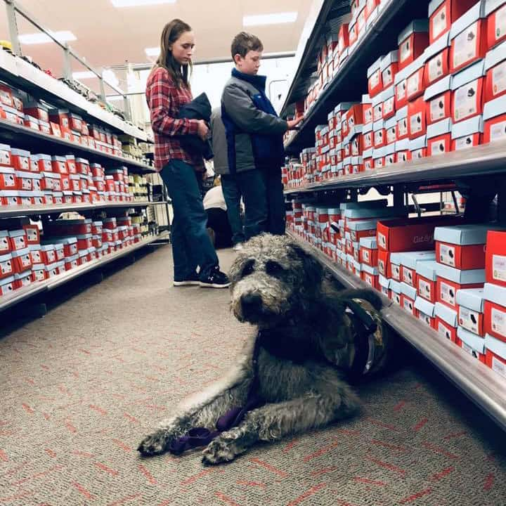 child in store with autism service dog