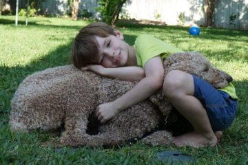 child with autism service dog