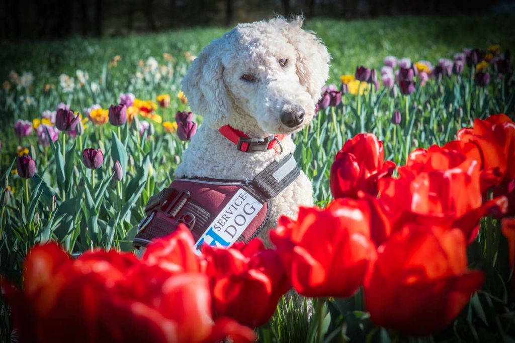 service dog provider