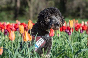 Qualify for a Highland Canine Service Dog