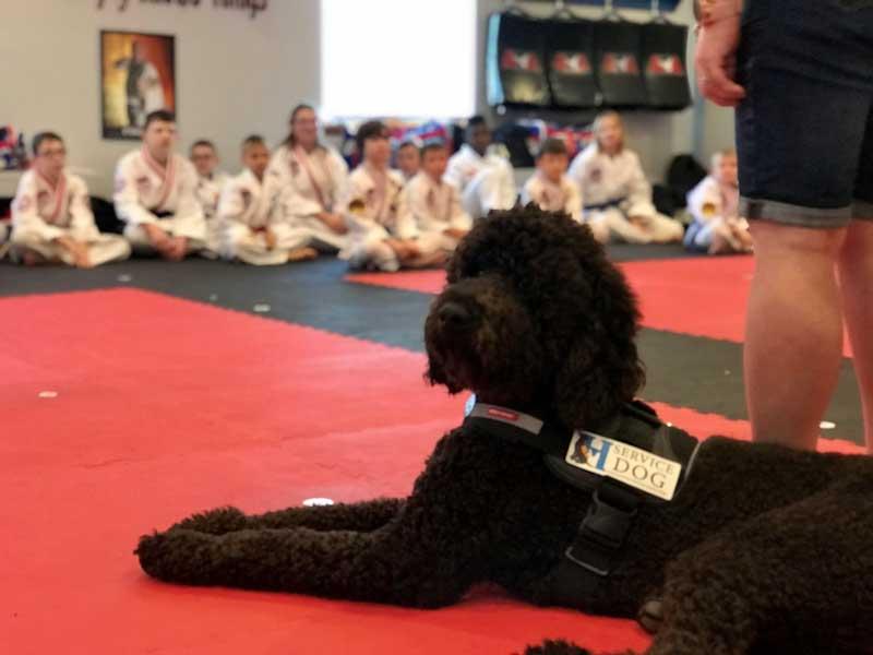 Service Dog for Autism at taekwondo