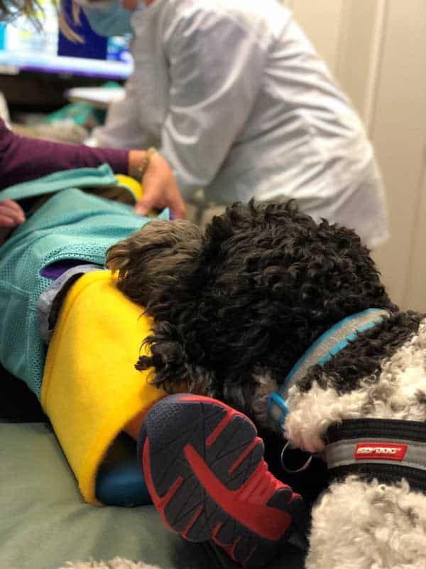 Dentist Appointment with Autism Service Dog