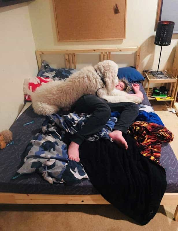 Service Dog for Autism lying over child