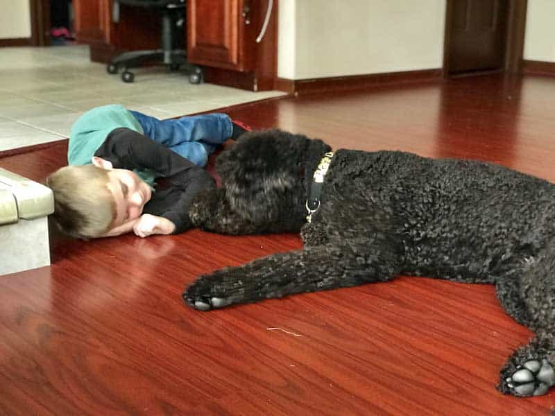 Service Dog for Autism with child