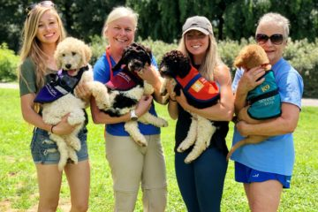 Service Dog Candidate Selection