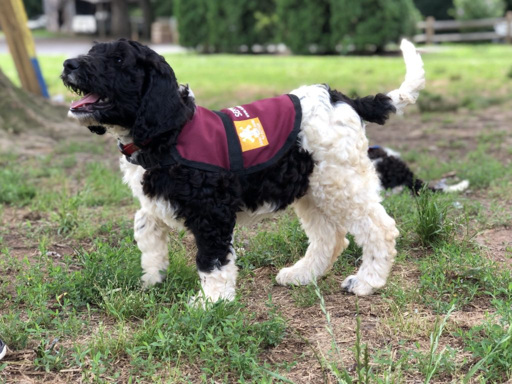 Choosing ther perfect puppy as service dog candidate