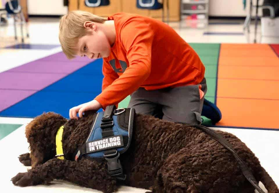 service dog in training with child