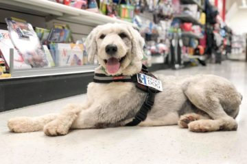 service dog at grocery store