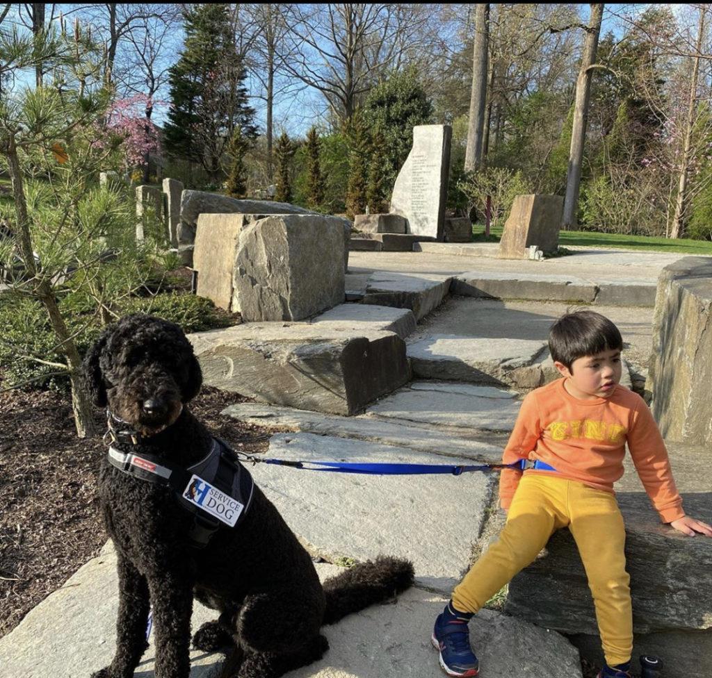 autism service dog mr miyagi