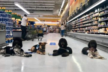 service dogs out in public