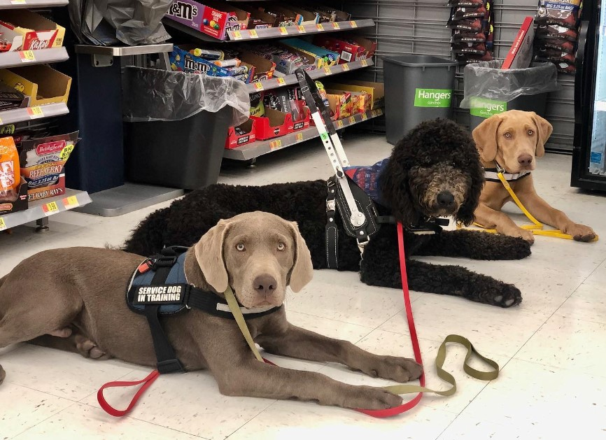 service dogs at the grocery store
