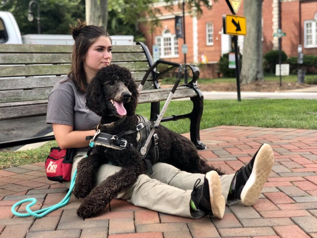 service dog trainers out in public