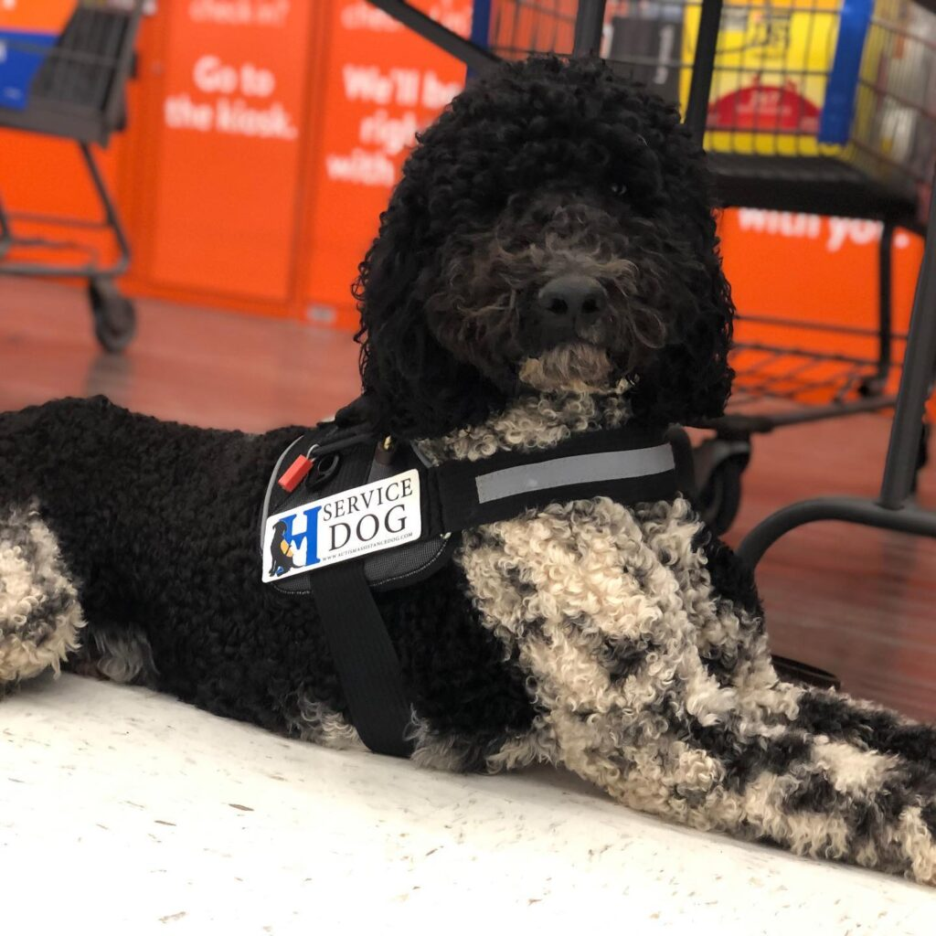 autism service dog in training