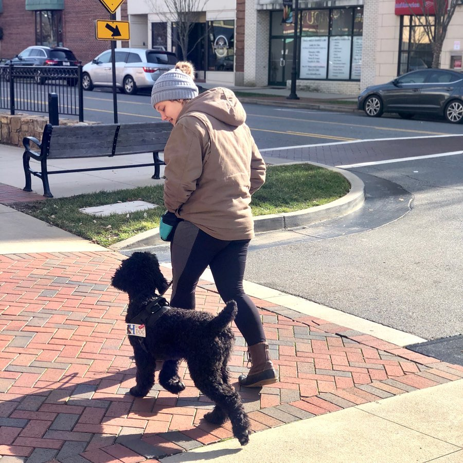 service dog in training out in public