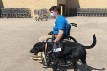 mobility service dog out in public at walmart
