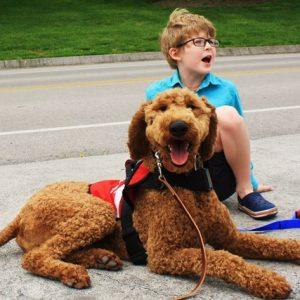 Service Dog Standard Poodle Otis the Goodboy