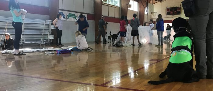 Service dog in gym class at school